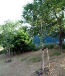 植樹して緑地帯の拡張